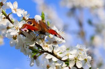 Приходи весна стихи