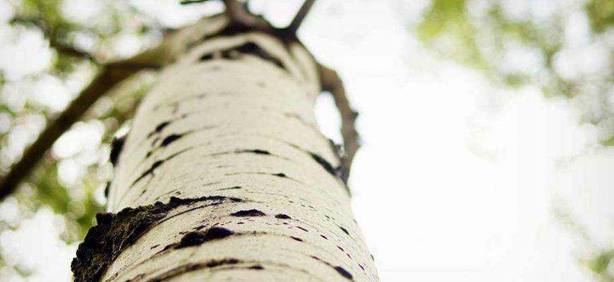 Стих А ветер листья ворошит — Валерий Мазманян
