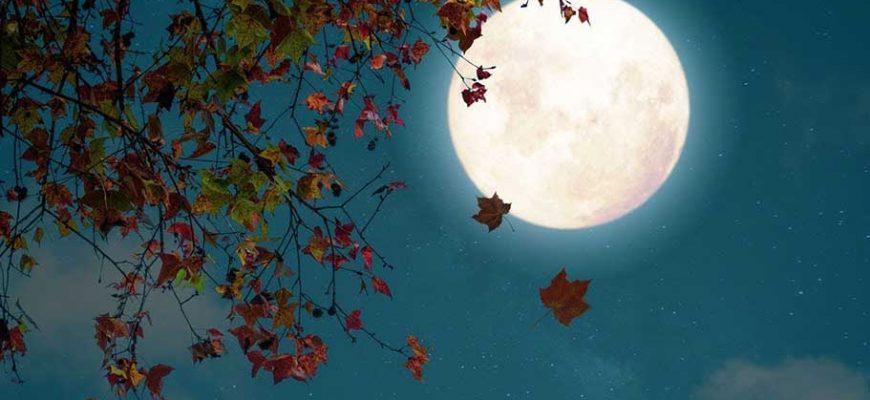 Читать стих Клён поцелованный луной — Валерий Мазманян