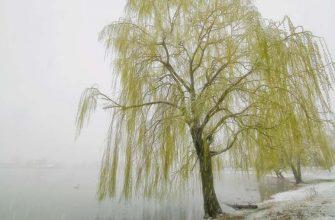 Стих Ветла грустила о былом — Валерий Мазманян